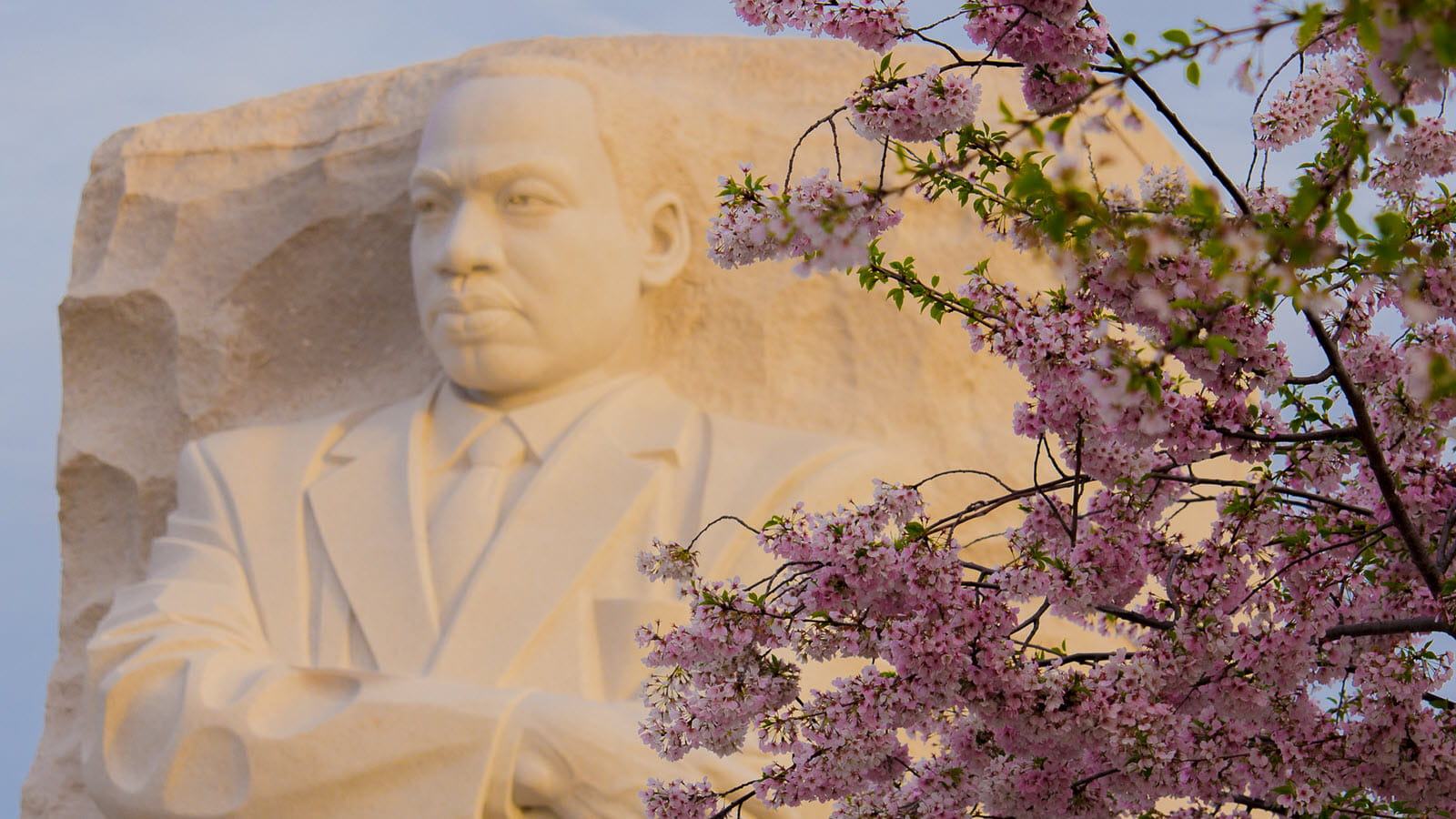 National memorial statue of Martin Luther King Jr. with cherry blossom branches