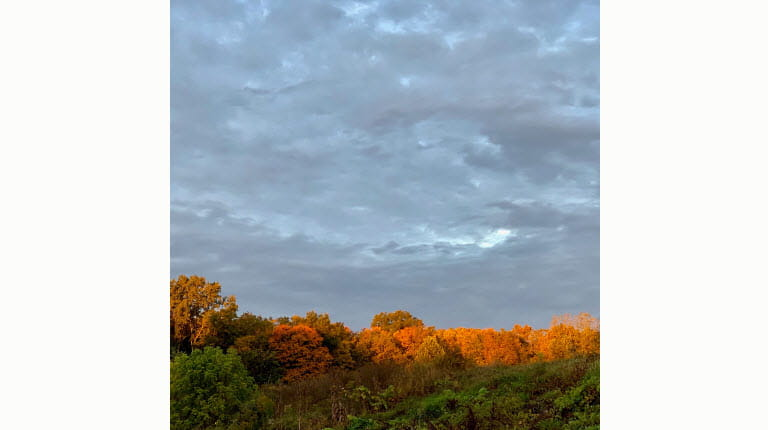fall treetops by Richard Lovrich