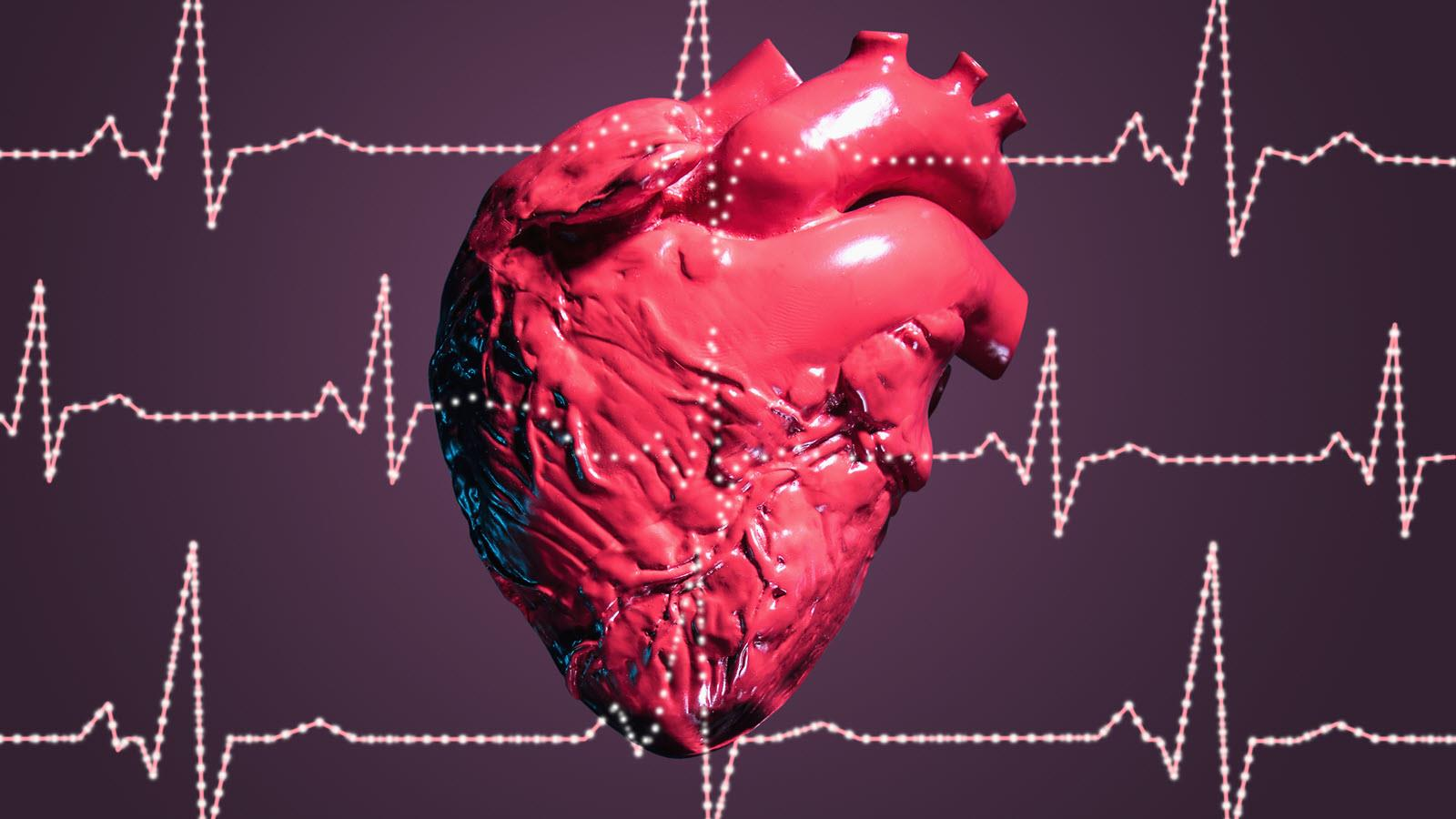 model of a heart with EKG waves