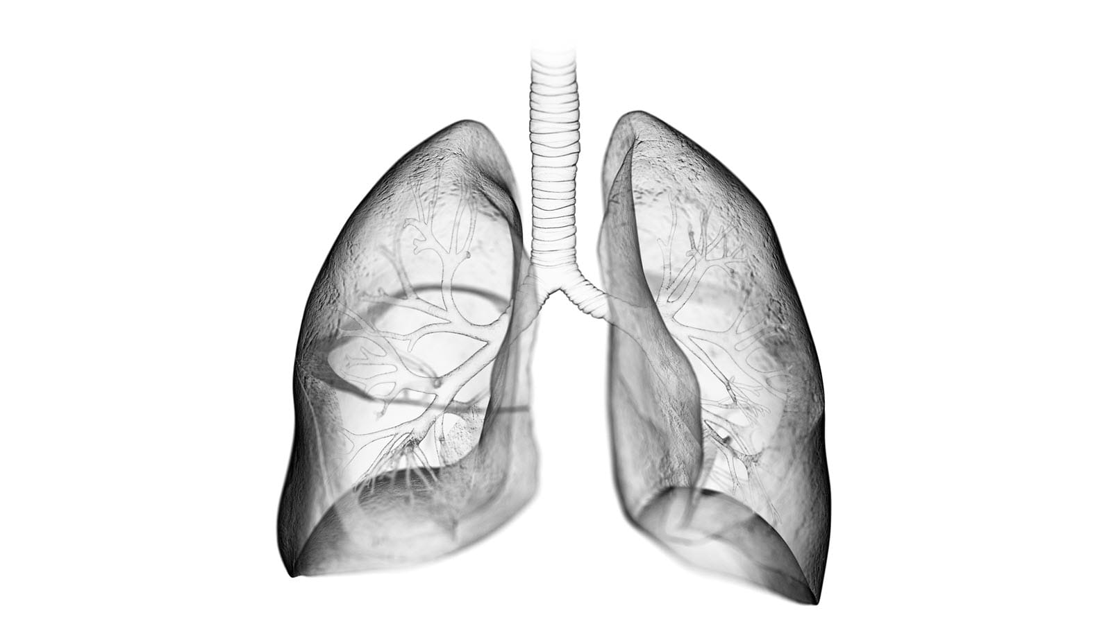 translucent image of the lungs