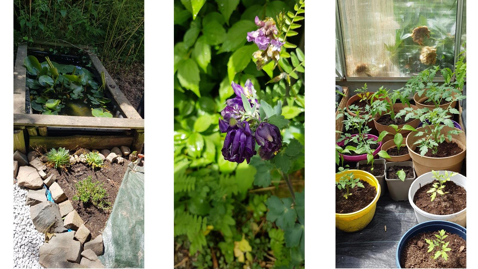 Flowers and plants in various stages in an outdoor garden