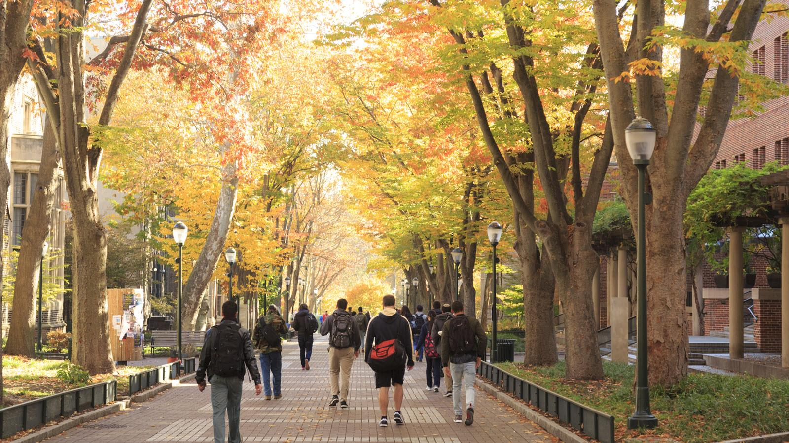 fall campus scene with students walking under trees