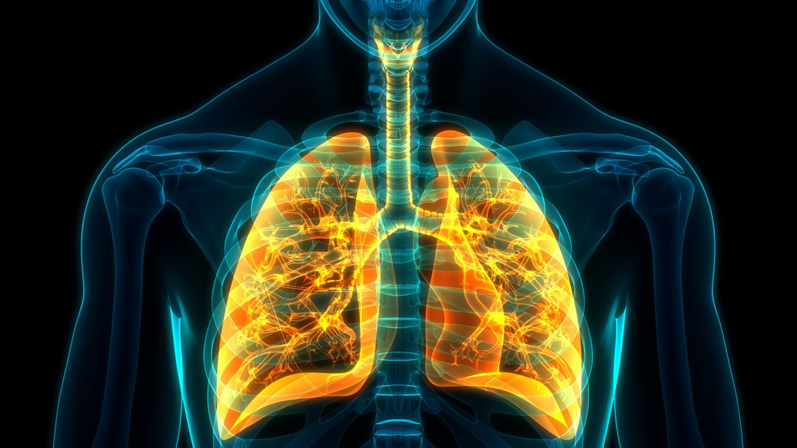 lungs highlighted in yellow on human torso